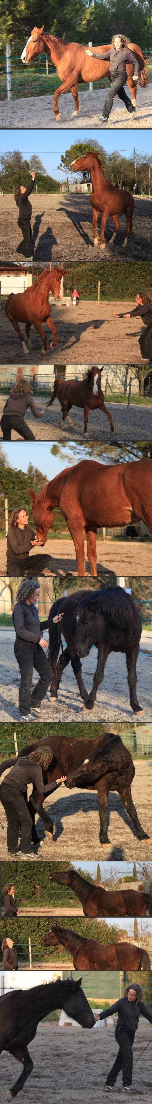 equi-coaching horse-coaching hippo-coaching